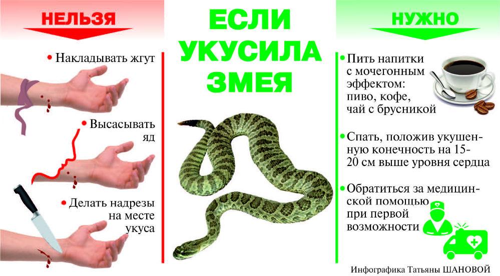 змеи1